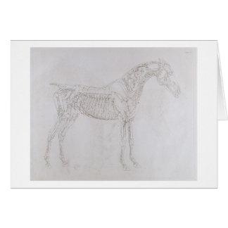 Ejemplo 'de la anatomía del caballo, inclu tarjeta de felicitación