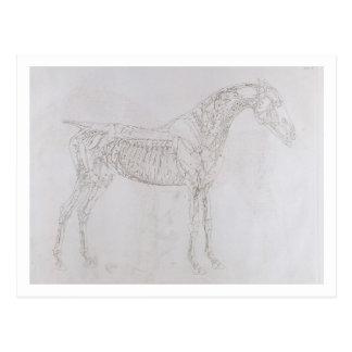 Ejemplo de la anatomía del caballo inclu tarjetas postales