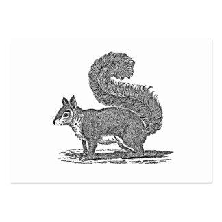 Ejemplo de la ardilla del vintage - ardillas 1800 plantilla de tarjeta de negocio