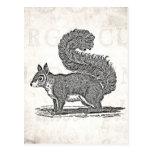 Ejemplo de la ardilla del vintage - ardillas 1800' tarjetas postales