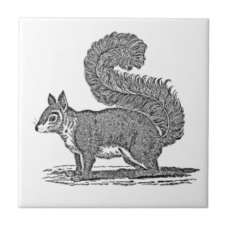 Ejemplo de la ardilla del vintage - ardillas azulejo cuadrado pequeño