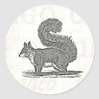 Ejemplo de la ardilla del vintage - ardillas pegatina redonda