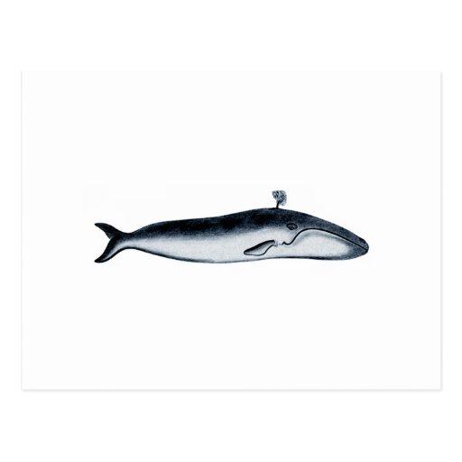 Ejemplo de la ballena azul (el echar en chorro) postales