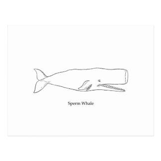 Ejemplo de la ballena de esperma (línea arte) postal