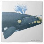 Ejemplo de la ballena derecha de North Pacific Tejas Cerámicas