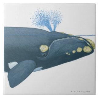 Ejemplo de la ballena derecha de North Pacific Azulejo Cuadrado Grande