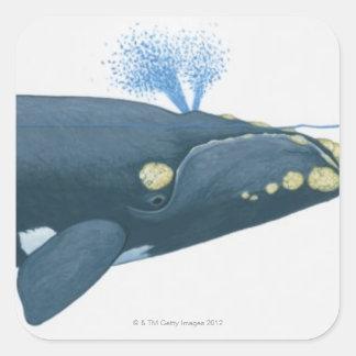 Ejemplo de la ballena derecha de North Pacific Pegatina Cuadrada