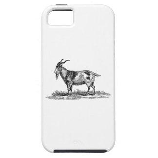 Ejemplo de la cabra nacional del vintage - cabras funda para iPhone SE/5/5s