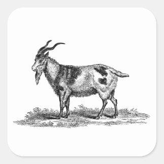 Ejemplo de la cabra nacional del vintage - cabras pegatina cuadrada