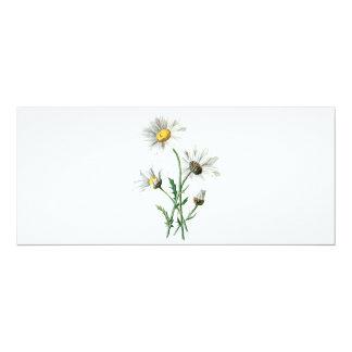 Ejemplo de la flor salvaje de las margaritas del invitación 10,1 x 23,5 cm