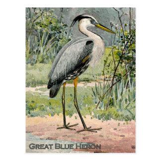Ejemplo de la garza de gran azul (titulado) tarjetas postales