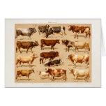 Ejemplo de la granja de las vacas lecheras de Bull Tarjeta