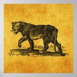 Ejemplo de la leona del vintage - africano del leó impresiones