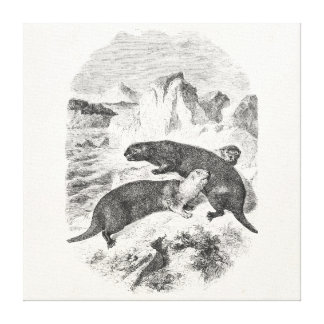 Ejemplo de la nutria de los 1800s de las nutrias d lienzo envuelto para galerias