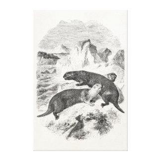 Ejemplo de la nutria de los 1800s de las nutrias d lona estirada galerías