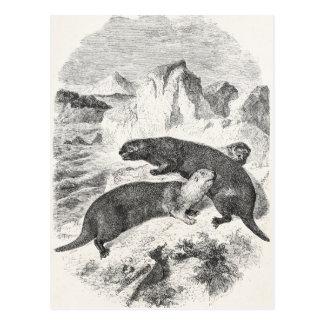 Ejemplo de la nutria de los 1800s de las nutrias postales