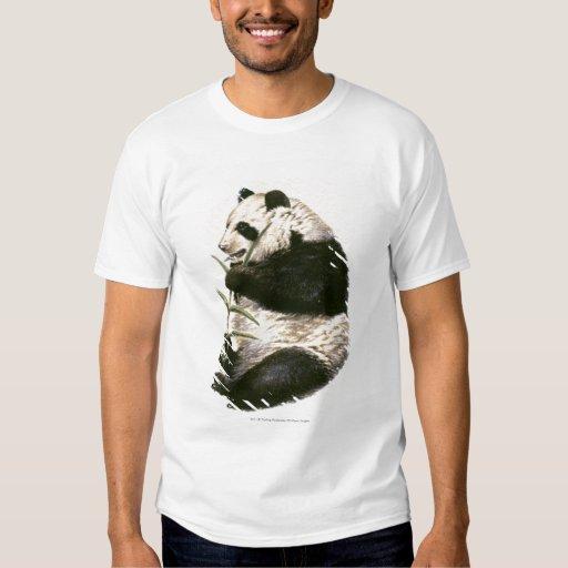 Ejemplo de la panda gigante que alimenta en bambú camisas