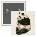 Ejemplo de la panda gigante que alimenta en bambú pin cuadrada 5 cm