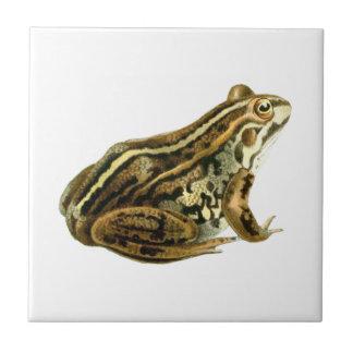 Ejemplo de la rana de Brown del vintage Azulejo Cuadrado Pequeño