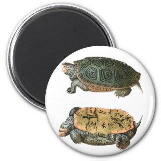 Ejemplo de la tortuga acuática de Diamondback Imán Redondo 5 Cm