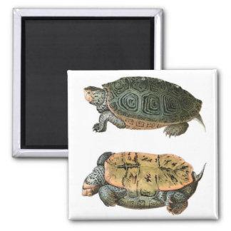Ejemplo de la tortuga acuática de Diamondback Imán Cuadrado
