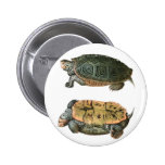 Ejemplo de la tortuga acuática de Diamondback Pin