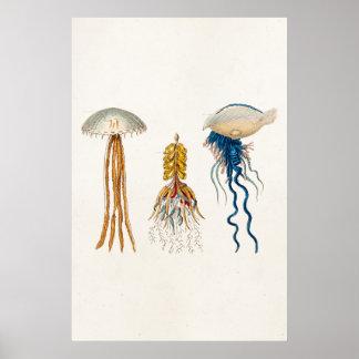 Ejemplo de las medusas de los 1800s del vintage - póster