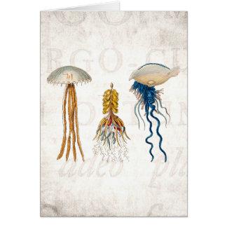 Ejemplo de las medusas de los 1800s del vintage - tarjeta