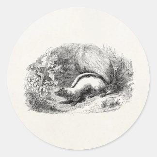 Ejemplo de las mofetas de los 1800s de la mofeta pegatina redonda