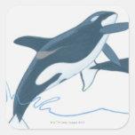 Ejemplo de las orcas (orca del Orcinus) Calcomanía Cuadradase