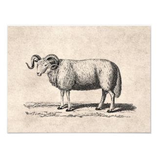 Ejemplo de las ovejas nacionales del vintage - esp arte fotográfico