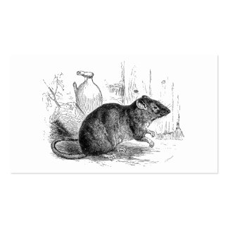 Ejemplo de las ratas de la rata del granero de tarjetas de visita