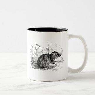 Ejemplo de las ratas de la rata del granero de taza de dos tonos