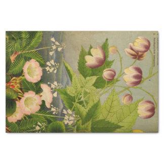 Ejemplo de libro botánico de la flor del vintage papel de seda pequeño