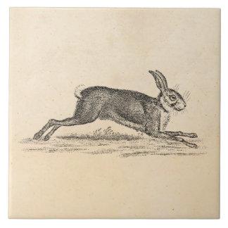 Ejemplo de los 1800s del conejo de conejito de las azulejo cuadrado grande