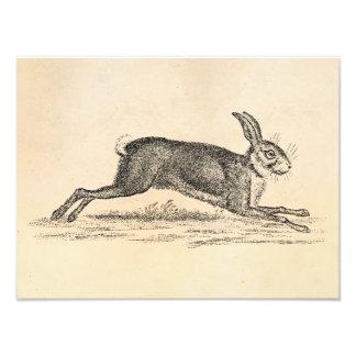 Ejemplo de los 1800s del conejo de conejito de las fotografía