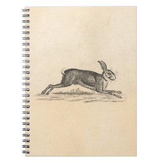 Ejemplo de los 1800s del conejo de conejito de las libros de apuntes