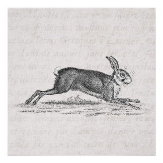 Ejemplo de los 1800s del conejo de conejito de las póster