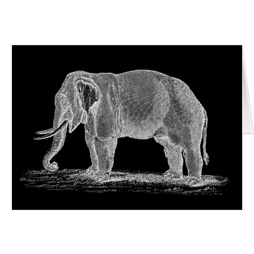 Ejemplo de los 1800s del vintage del elefante blan felicitación