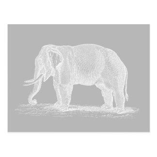 Ejemplo de los 1800s del vintage del elefante blan tarjeta postal