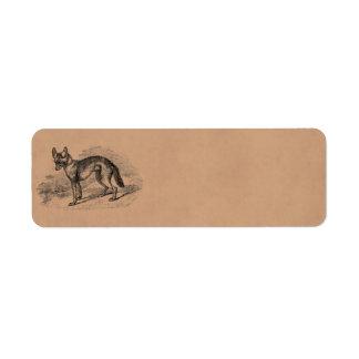 Ejemplo de los chacales de los 1800s del perro del etiqueta de remite