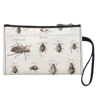 Ejemplo de los escarabajos de los insectos de los