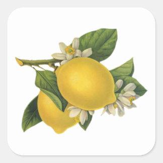 Ejemplo de los limones del vintage pegatina cuadrada