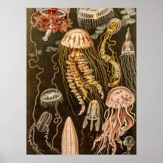 Ejemplo de los pescados de jalea de la antigüedad poster