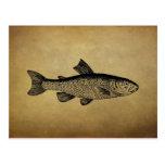Ejemplo de los pescados del vintage postal