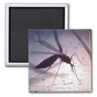 Ejemplo de morder del mosquito imanes