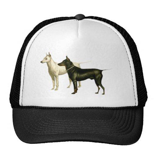 Ejemplo de Terrier del inglés del vintage Gorros