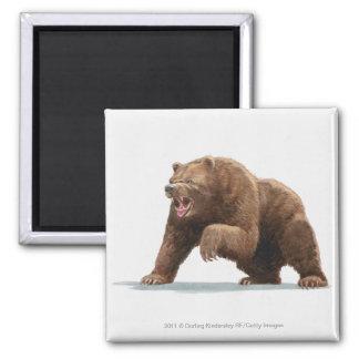 Ejemplo de un oso de Brown Imán Cuadrado