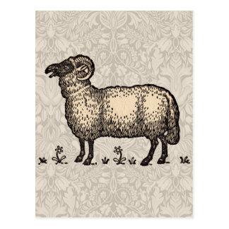 Ejemplo del animal del campo de las ovejas del postal