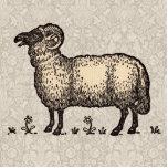 Ejemplo del animal del campo de las ovejas del vin escultura fotográfica